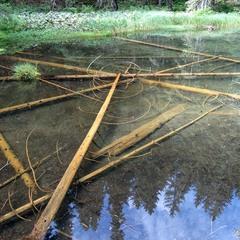 Озеро забуття