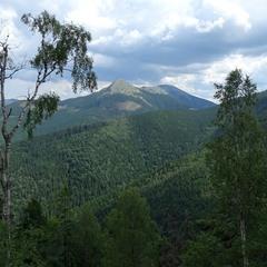 Дерева і гори