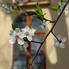 Весна і старе місто