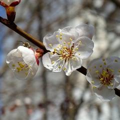 Весняне гудіння