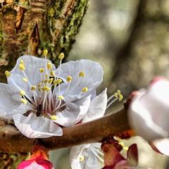 Весняний цвіт