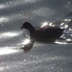 Весняне озеро Сонця