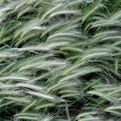 Трави