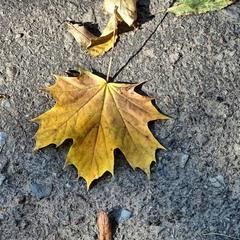 Слід осені