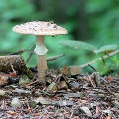 У дрімучому лісі