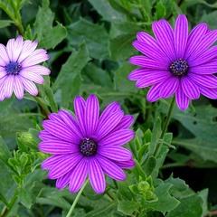 Квіти міста