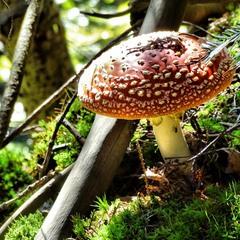 Осінні гриби в осінніх горах