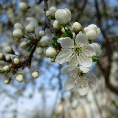 Весна невловима