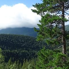 Дерево і хмара