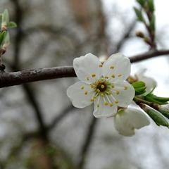 Весняний день