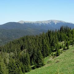 Ліс і гора