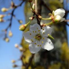 Нинішня весна