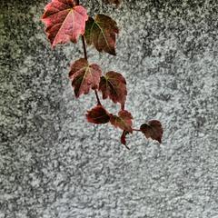 Етюд сумної осені
