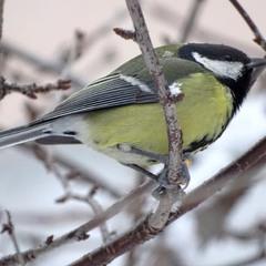 Птах зими