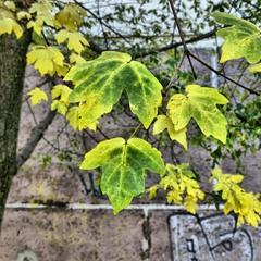 Осінь і графіті
