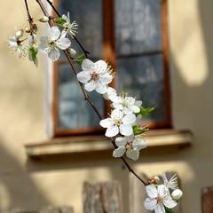 Весна в старому місті