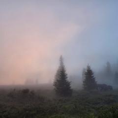 Рожевий туман