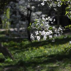 сезон цветения
