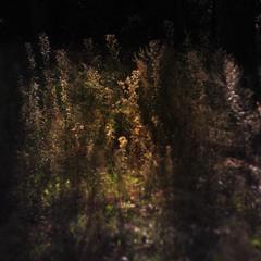 сон осенней травы