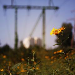 осень на окраине города