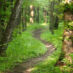 Казковий весняний ліс