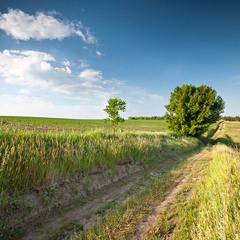 Сільський пейзаж