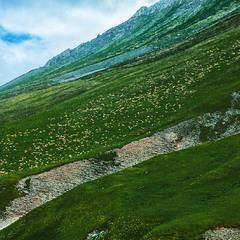 Кавказ. Стада овец, пасущиеся на склонах гор.