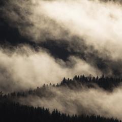 Польоти над залишками карпатського лісу...