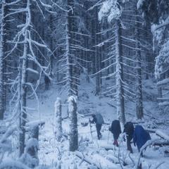 Дихання зими