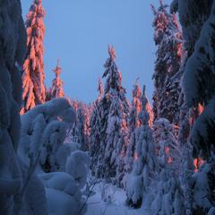 Бризнуло сутінковим червоним