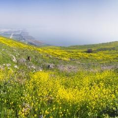Туман над Галилейским морем