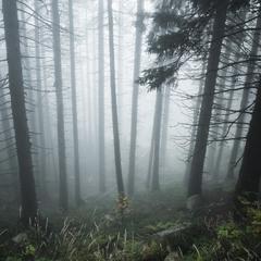 Схили лісисті