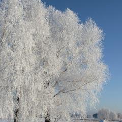 Снежная...