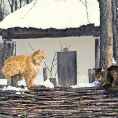 Зима, зима...и лапы мёрзнут...