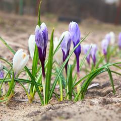 А весна скоро?