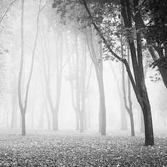 World of trees