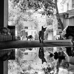 город котов
