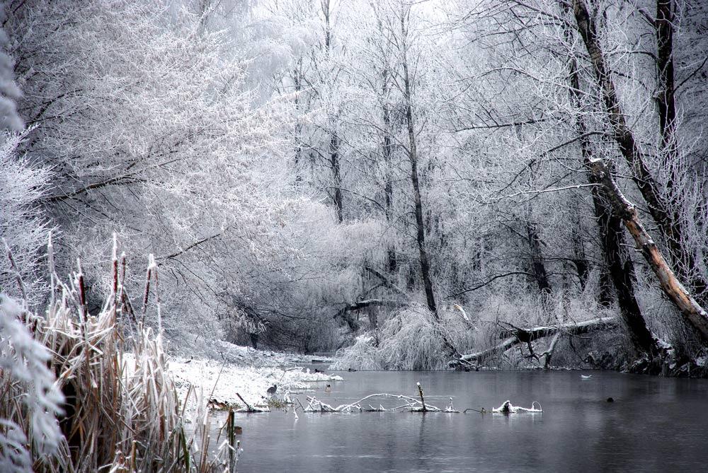 фото прощай зима рагу кабачками простое
