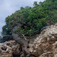 Сбежавшее дерево