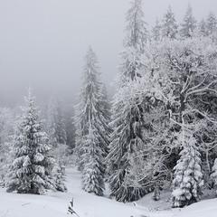 Зимова картинка