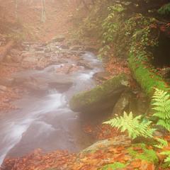Казки ельфійського лісу