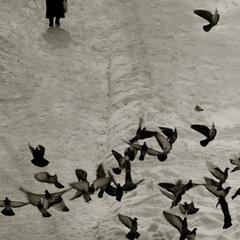 """""""Любов і голуби"""""""