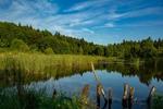 Озеро в лісі