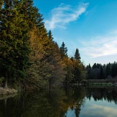 Трошки лісу