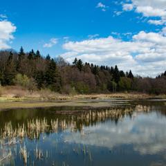 Озерце в лісі