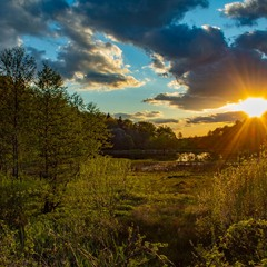 Захід сонця в лісі