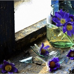 квіти помирають тихо...