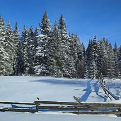 Тихий зимній день в Карпатах.