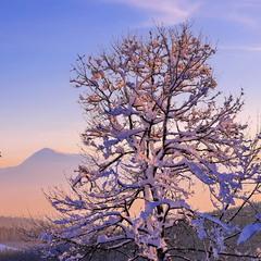 Вечір в Буковелі. Вдалині в променях вечірнього сонця видно гору Петрос (висота 2020 м)