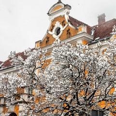 Дерева снігом розцвіли